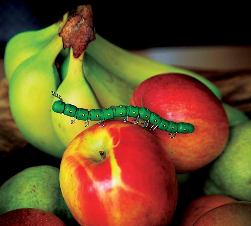 Pencil and paper clip bugs: emperor moth caterpillar