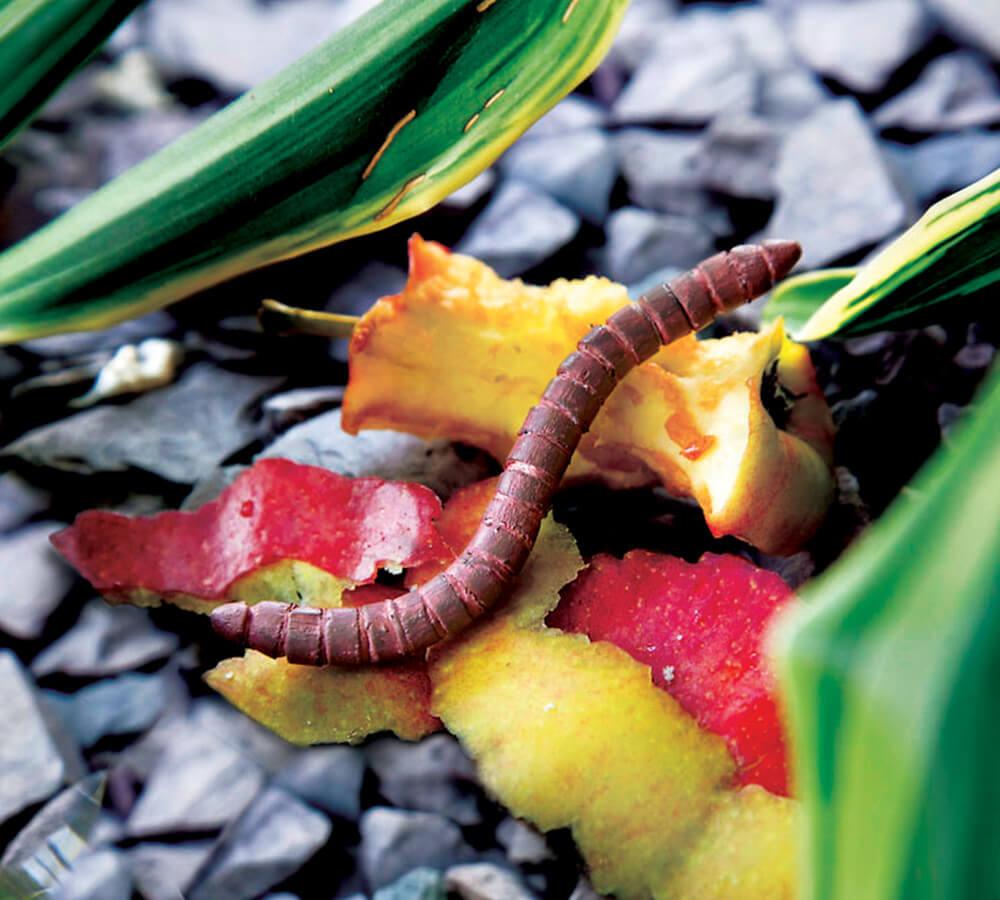 Pencil and paper clip bug: earthworm